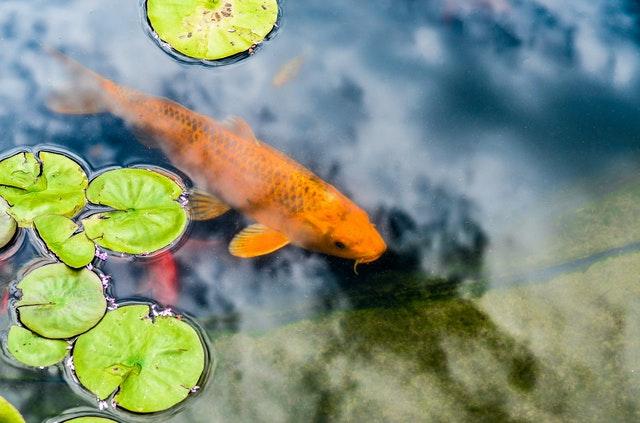 Teich friert zu